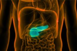 Pancreas diagram
