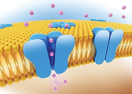 Computer illustration of ion channels embedded in a cell membrane