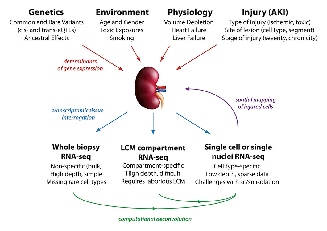 Kidney Precision Medicine Project