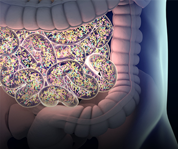 Gut Reaction: The Microbiome and Kidney Transplantation