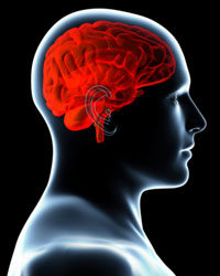 illustration of a semi-transparent man with his brain shown