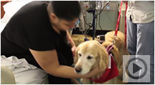 A day in the life of a pet therapy dog at NewYork-Presbyterian