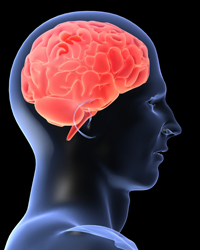 Illustration of human head and brain
