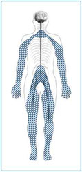 drawing of human with shading revealing areas of the body that can be affected by neuropathy