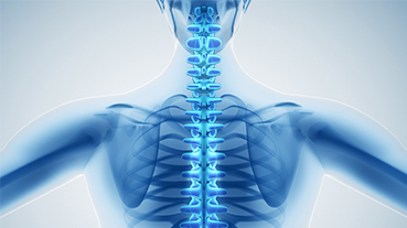 Digital medical illustration of a human spine